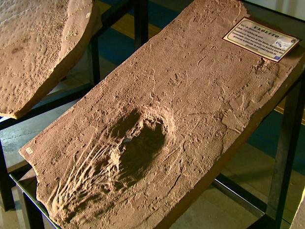 Urólito foi encontrado em Araraquara e está exposto em São Carlos (Foto: Paulo Chiari/EPTV)