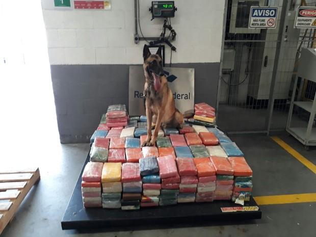 Drogas foram apreendidas com auxilio de cão farejador (Foto: PM/Divulgação)
