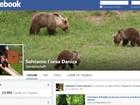 'Caçada' a ursa com dois filhotes causa comoção na Itália