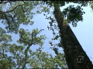 Flona do Tapajós (Foto: Reprodução/TV Tapajós)