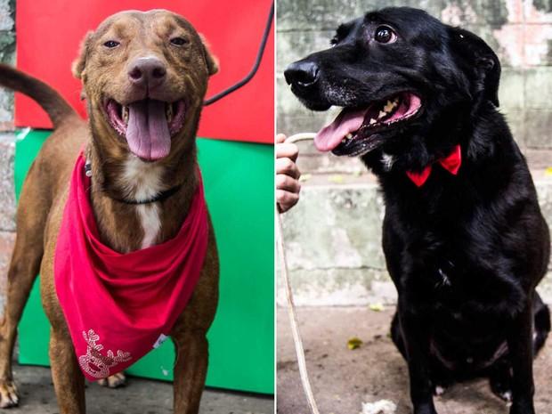 Centro de Controle de Zoonoses (CCZ) de São Paulo faz campanha de adoção de cães e gatos idosos (Foto: Renata Assumpção)