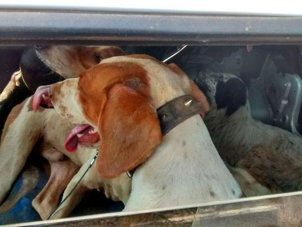Com a dupla estavam seis cachorros (Foto: Polícia Ambiental/Cedida)
