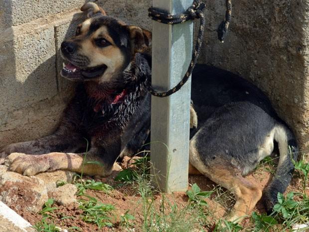 Cão abandonado aguardou quase 1 dia todo para ser resgatado (Foto: Samantha Silva/ G1)