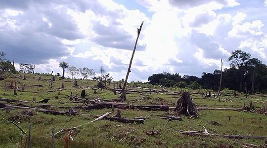 Floresta derrubada, é o primeiro passo grileiros se apossarem de terras públicas (Foto: Daniele Gidsicki/Flickr)