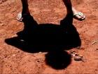Polícia Civil investiga caso de criança que tentou ferir irmã e vizinha em MS