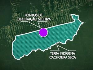 Área onde era realizada a extração ilegal de madeira (Foto: TV Tapajós/Editoria de Arte)