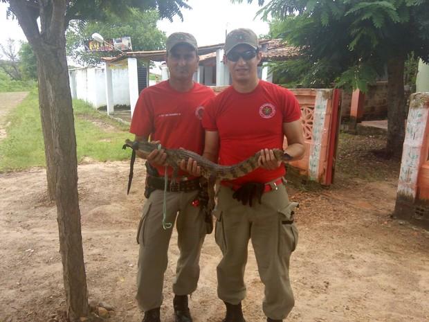 Bombeiros resgatam jacaré de papo amarelo em quintal de casa em Uruoca, no interior do Ceará (Foto: Corpo de Bombeiros/Divulgação)
