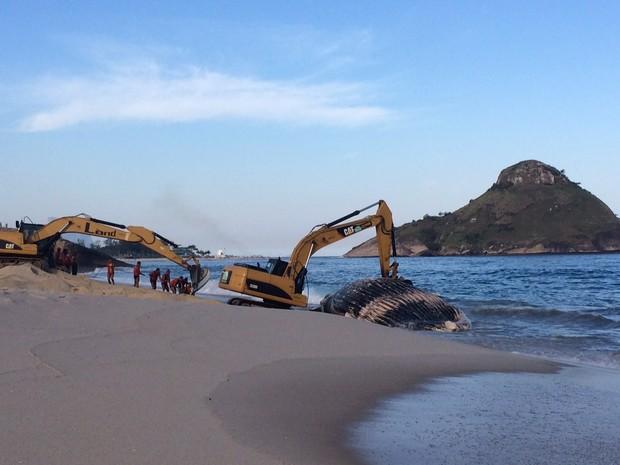 Baleia encalhada é retirada da Praia da Macumba, no Rio (Foto: Lívia Torres/G1)
