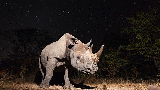 Imagem vencedora foi a bela foto de um rinoceronte negro feita na Zâmbia (Foto: Will Burrad/BBC Wildlife Magazine)