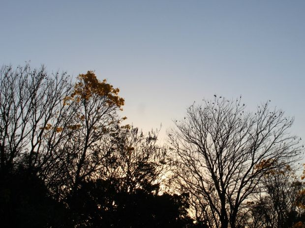 Céu de Campo Grande limpo na tarde desta quinta-feira  (Foto: Adriel Mattos/ G1MS)