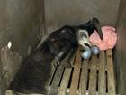 Números de animais socorridos devido às queimadas aumentam 40%