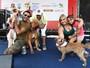 Saiba como aconteceu a 10ª edição da Cãominhada TV Tribuna