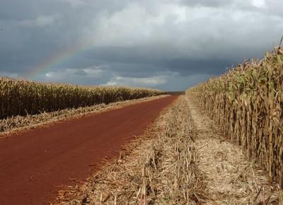 milho-plantacao (Foto: Ernesto de Souza/Ed. Globo)