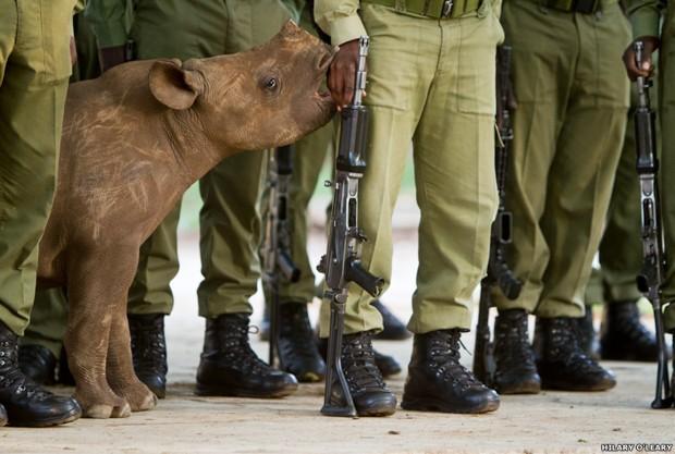 Foto de um filhote de rinoceronte-negro na Reserva de Vida Selvagem Maililangwe, no Zimbábue, conquistou o primeiro lugar na categoria Conservação (Foto: Hilary O'Leary)