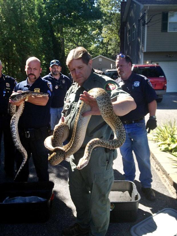 Autoridades americanas apreenderam cerca de 850 cobras em Shirley (Foto: Brookhaven, N.Y. Public Information Office/AP)