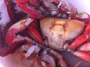 Começa o defeso do caranguejo em Sergipe (Foto: Marina Fontenele/G1)