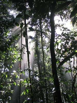 Até quando a Amazônia consegue pagar a conta do clima?