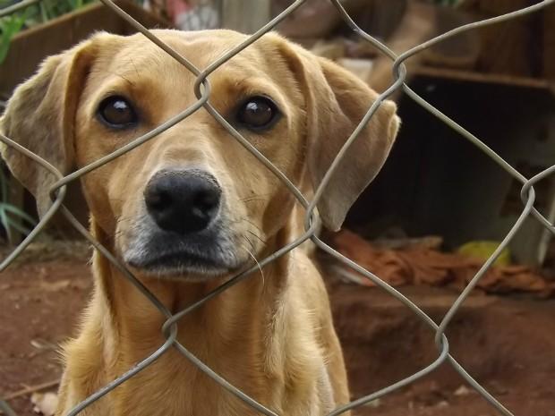 Adotar 56 cães e 30 gatos: um exemplo de amor e carinho aos animais (Foto: Caio Silveira/ G1)