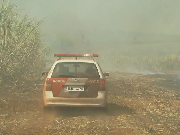 PM continua realizando buscas em canavial próximo ao CPP em Jardinópolis (Foto: Reprodução/EPTV)