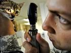 Planos de saúde para pets custam mais de R$ 300 e têm até acupuntura