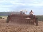 Preço do trigo provoca redução da área plantada com o grão no PR