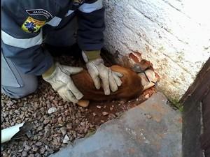 Corpo de Bombeiros voluntários de Jaguaruna ajudou animal (Foto: Elza Medeiros Freccia/ Divulgação)