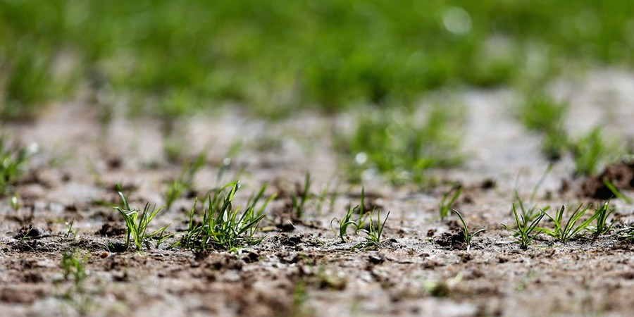 O gramado do