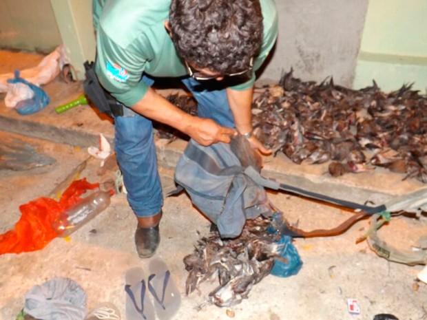 Aves foram apreendidas em Currais Novos, na região Seridó do RN (Foto: Divulgação/Ibama)