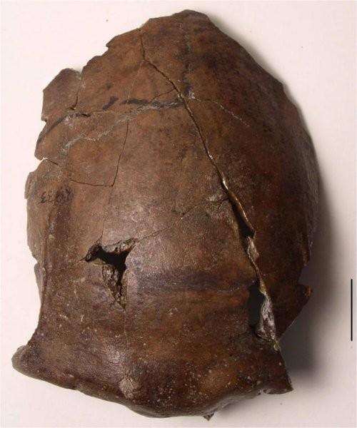 Crânio de 6 mil anos encontrado na Papua-Nova-Guiné (Foto: Mark Golitko)
