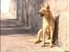 Polícia divulga marca da mordida da cadela que evitou estupro da dona