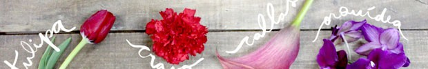 Significado das Flores (Foto: Karen Hofstetter)