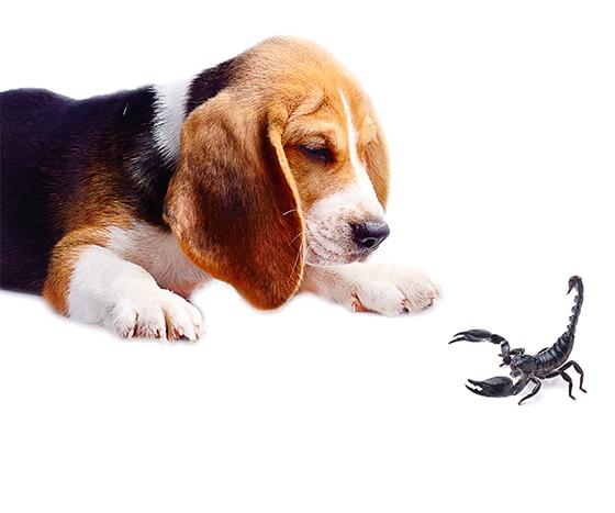 Cachorro e escorpião  (Foto: thinkstockphotos)