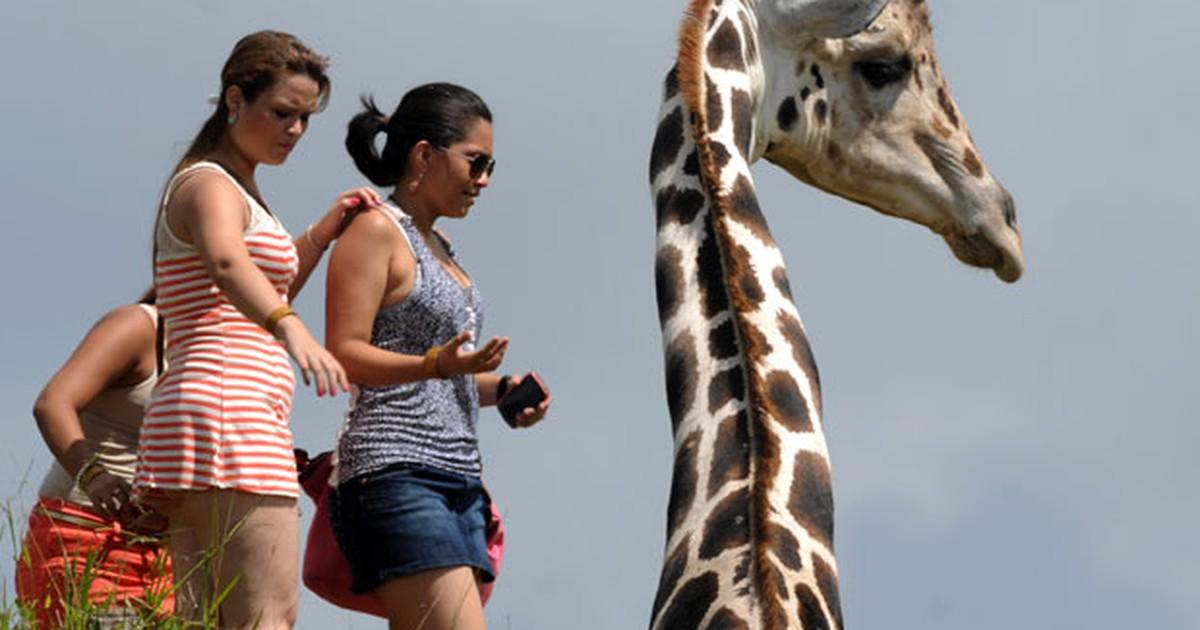 Zoo expropriado de suspeitos de tráfico abre ao público em Honduras