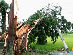 Grande árvore foi destruída pelos fortes ventos causados pelo tufão que passa pelo Japão (Foto: Reuters)