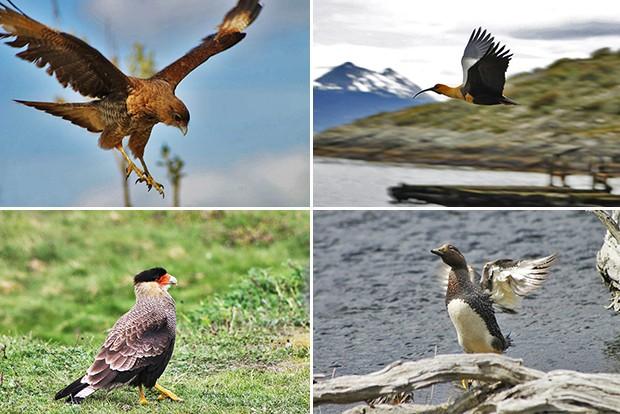 Ushuaia_aves 2 (Foto: Juan Bautista Cabral )