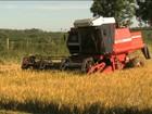 Produtores de arroz do Sul do país planejam a comercialização da safra
