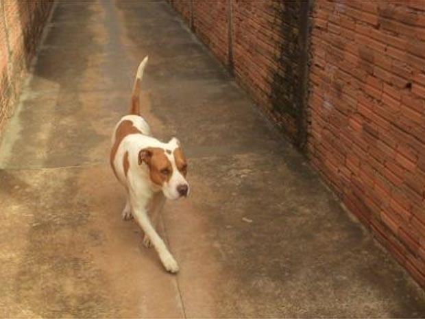 Cão que atacou bebê foi recolhido pelo Centro de Controle de Zoonoses (CCZ) de Jaboticabal (Foto: Reginaldo Coelho)