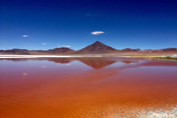 Laguna colorada repleta de flamingos (Foto: Divulgação/ RBS TV)