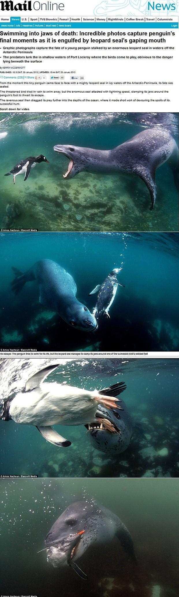 Foca-leopardo abocanha pinguim na Antártica (Foto: Daily Mail/Reprodução)