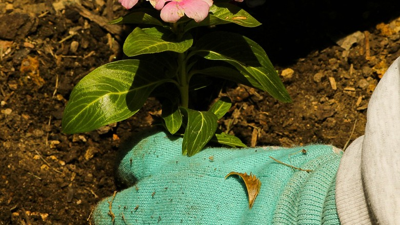 maos-terra-solo-cultivo-horta (Foto: Creative Commons)