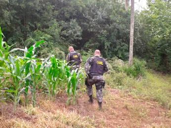 Policiais realizam buscas na mata no interior de Cotiporã (Foto: Mariane Schlindwein/RBS TV)