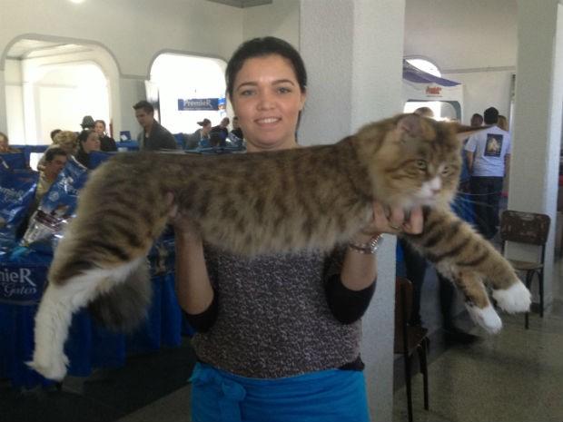 A jornalista Márcia Olivieira e o gato da raça Maine Coon, que pode ter até 1,20 m de comprimento (Foto: Rodrigo Saviani)