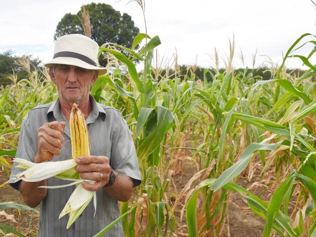 José de Antão não planta para comer. O que ele tira da terra vira ração para os animais. (Foto: Anderson Barbosa e Fred Carvalho/G1)