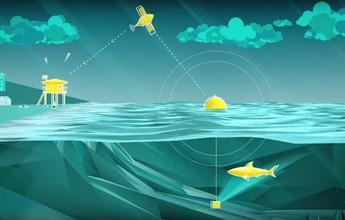 """WSL usa """"boia inteligente"""" com sonar contra tubarões na etapa de J-Bay"""