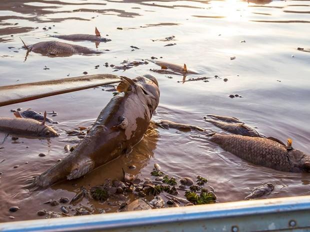 Animais morrem com chegada da lama (Foto: Carlos Dório Costa/ Arquivo Pessoal)