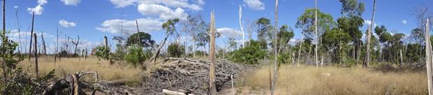 Área da floresta amazônica que ficou degradada após incêndio experimental feito no Mato Grosso (Foto: Divulgação/Paulo Brando)