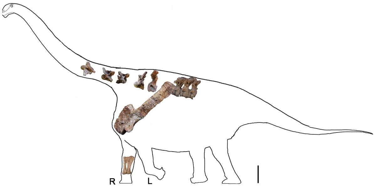 cientistas encontram f u00f3ssil de dinossauro gigante - esp u00e9cie era desconhecida at u00e9 ent u00e3o