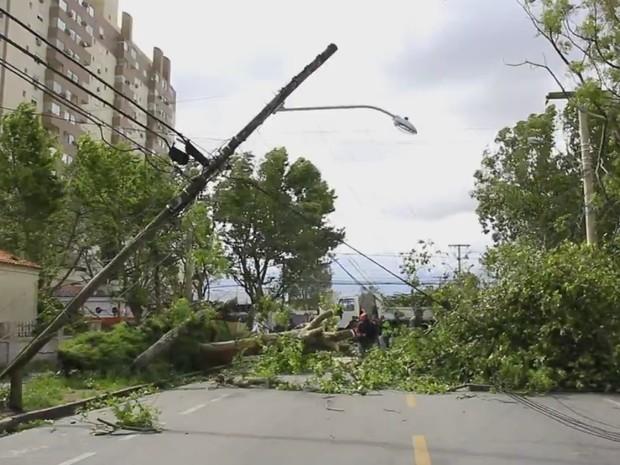 Vento derrubou árvores, que derrubaram poste em Rio Grande, RS (Foto: Reprodução/RBS TV)