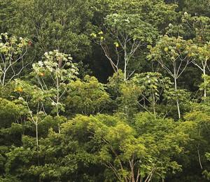 Área de floresta próxima a Manaus, no Amazonas (Foto: Mario Tama/Getty Images)