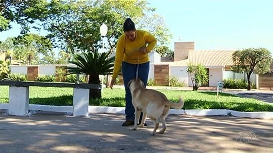 Terapeuta canina ajuda a educar cães agitados e agressivos, em Goiás